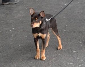 Stadtspaziergang mit der Hundeschule