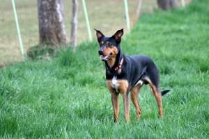 Fritz 2 Jahre alt